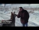 Putin and magic deer antler blood