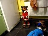 Собачки -- Дед Мороз и Снегурочка танцуют лизгинку