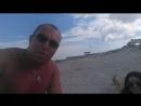 Живность на пляже mp4