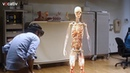 Holograms for Medical Students - instead of cadavers