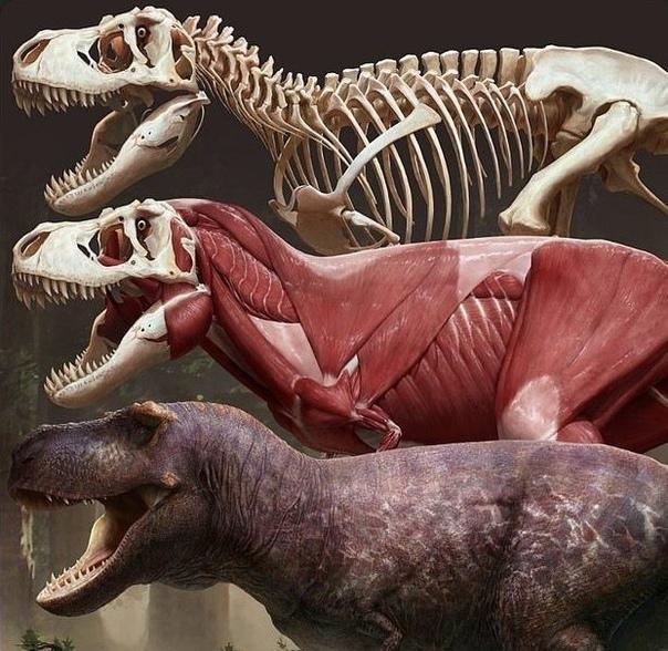 команда археологов и художников совместными усилиями воссоздала на компьютере реальный образ тираннозавра - по мнению ученых, наиболее точный на сегодняшний день. и он заметно отличается от
