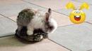 Видео для детей 🐇😂 Смешные кролики и зайцы Приколы с кроликами и зайцами 2018 – Kids Funny rabbits