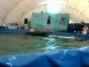 Дельфины прокатили на лодке👍🐋🐳😀