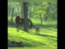 Ох уж эти ослики #ehorse