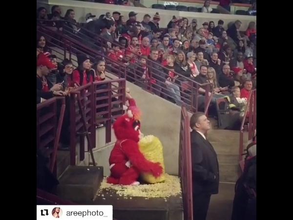 Chicago bulls mascot vs Brooklyn Nets fan.so funny
