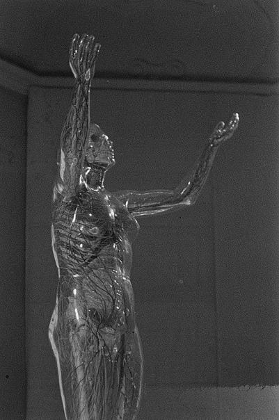 Стеклянная женщина анатомическая скульптура в немецком музее гигиены Данный экспонат был впервые представлен на открытии Второй международной выставки гигиены в 1930
