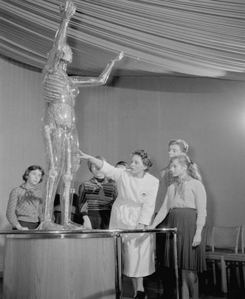 Стеклянная женщина  анатомическая скульптура в немецком музее гигиены