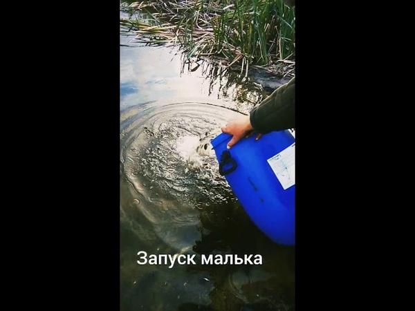 Запуск малька на озеро в Крышиловщине