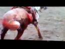 Бедная лошадь