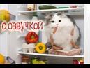 Приколы с котами и смешная озвучка ТОПовая подборка для детей кот Мурзик Domi Show