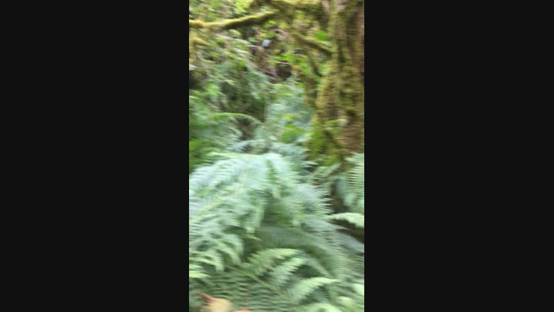 Заколдованный лес 🌳