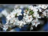 Спокойная Музыка Для Снятия Стресса - RELAXING PIANO - Music - Белый Шум Stress Relief Music