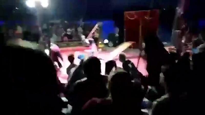 В Волгограде медведь напал на дрессировщика
