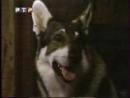 Маленький бродяга РТР, 1999
