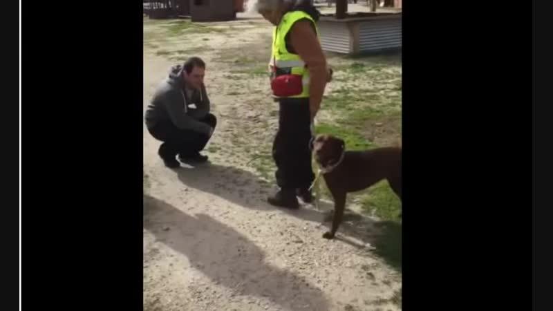 Грустная собака сидела в приюте 2 года но вдруг почувствовала знакомый запах