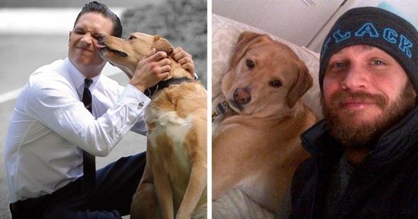 том харди написал трогательное письмо в память о своём любимом псе вуди, которого не стало чуть больше года назад. «впервые я увидел вуди, когда тот поздней ночью бежал по магистрали в пичтри