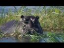 Нетронутые уголки дикой природы Natures Microworlds 05 Okavango