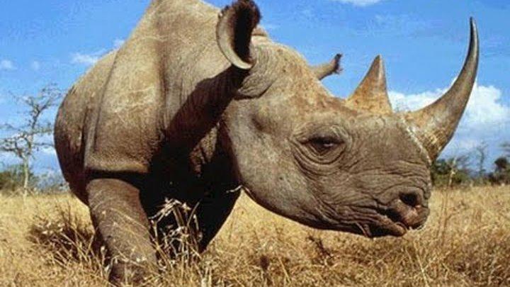 Дикие животные. Убийцы. Мир Африки. Документальный фильм Discovery. Серия 2.
