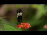 BBC Как устроена природа - Джунгли.mp4