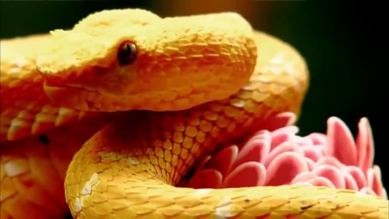Animal Planet Discovery Channel Wildlife Animals Beauty of Snake Documentary YouTube