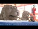 Львам на мосту через канал Грибоедова почистят зубы и почешут гриву впервые за 18 лет. Репортаж  Телеканал Санкт-Петербург