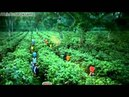 Реклама Чибо Приват Кафе - Новый мир разнообразных вкусов