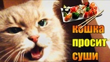 Пробуем суши от Manga в Алматы
