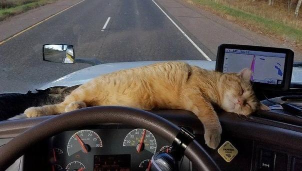 СТАРОЕ КАФЕ Он работал дальнобойщиком. Дальнобои, это такие люди знаете, которые всю жизнь проводят в дороге. И желания у них всего два спать и есть. Такая вот жизнь, дамы и господа. Так он и
