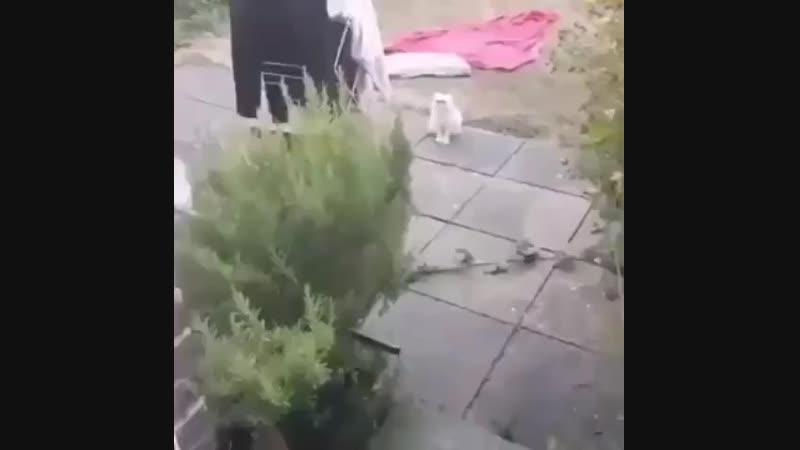 стремный кот