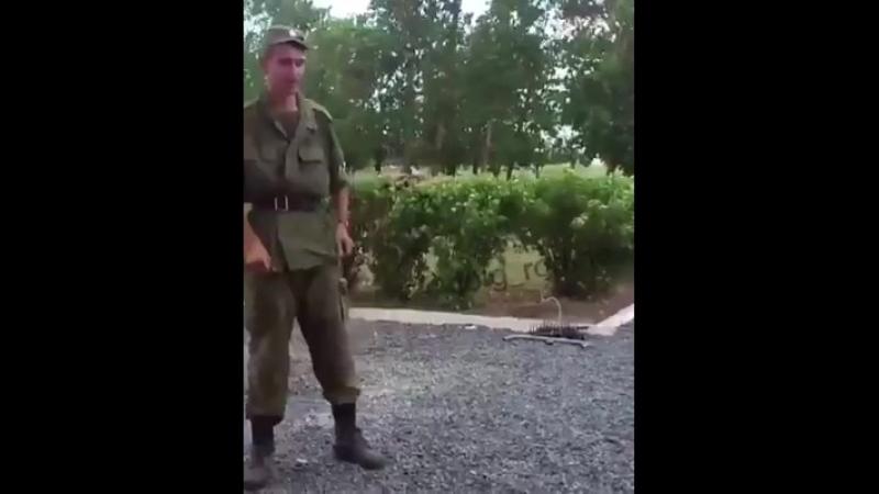 Уёбищные скаклы - или майдаун кастрюлеголовых свидомых)