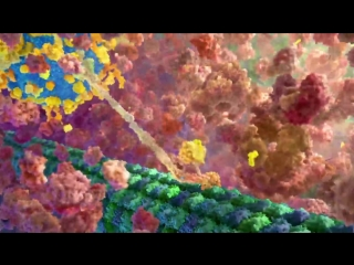 The Inner Life of the Cell - Protein Packing [Narrated] [HD]