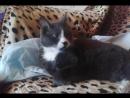 Кот слушает песню Отвези меня в Питер (Вероника Муртазина)