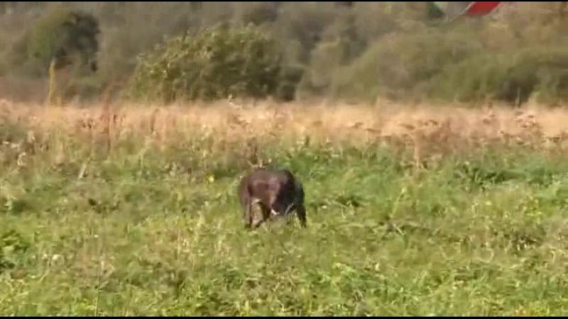Охота - собачья работа - 4серия