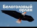 Воздушный змей Белоголовый Орлан