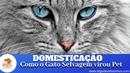 Domesticação Como o Gato Selvagem Virou Pet