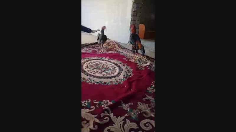 саман первый спаринг 1 раунд Видео от Иманғали