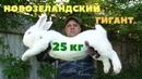 Нам врали о самом тяжёлом кролике в мире Рекорды Гиннесса Факты События