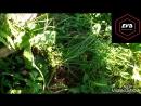 Последствия обработки полей гербицидами и пестицидами Компания ООО Агро Виста Тамбов ранее ООО Терновское на пчелах