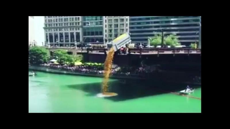 В Чикаго прошел благотворительный заплыв 60 тысяч уточек
