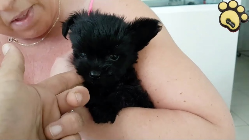 Cute Little Puppy Was Found In The Middle Of Nowhere | Dog Rescue Stories