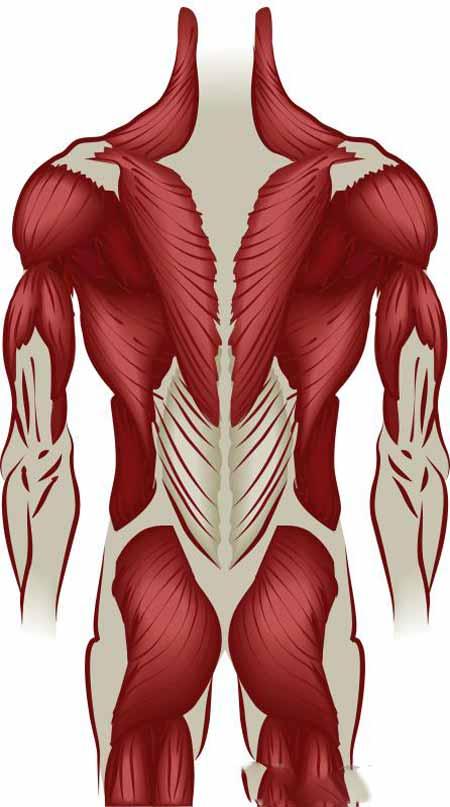 Боли в спине часто бывают вызваны травмами мышц