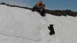 Bear cub climbs mountain to reunite with mama bear