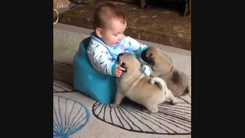 дети и собачки