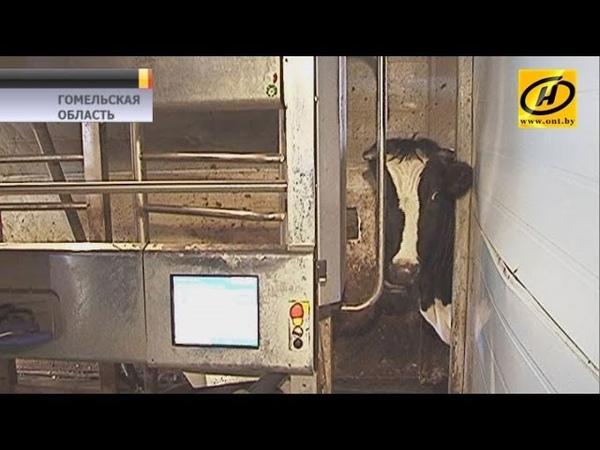 Ферма в Гомельской области погрязла в бесхозяйственности и долгах