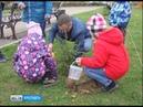 В регионе высажено около 37 тысяч молодых деревьев
