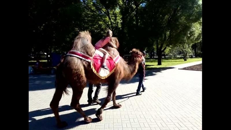 Кариша и верблюд