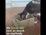 Жизнь кота без передних лап