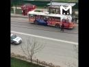 Тролейбус проезжай !!Кошка_проходи !!