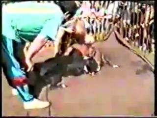 Собачьи бои или боря против всех(чемпион росси)