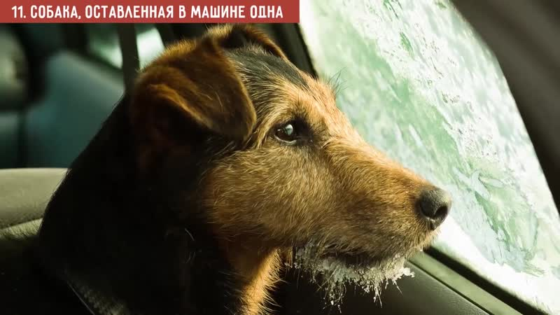 12 Вещей, Которыми вы Причиняете Вред своей Собаке, Не Осознавая Этого
